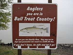 Bull trout sign at Lake Pend Oreille