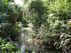 Juniper Springs Ocala National Forest