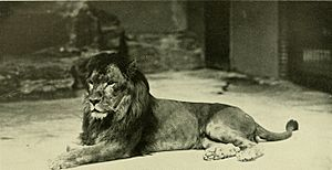 Annual report - New York Zoological Society (1903) (18243500220)