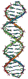 DNA Overview2