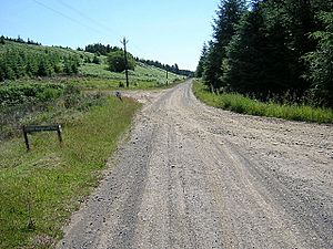 Track in Kielder Forest - geograph.org.uk - 204470