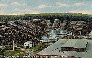Log Pile of the Great Northern Paper Co., Millinocket, ME