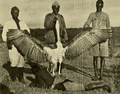 The Big Game of Africa (1910) - Giant Marabou