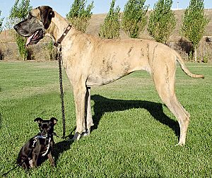 Big and little dog 1