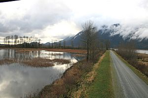 Pitt Lake bog and dike
