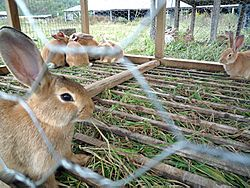 Rabbits at Polyface Farm