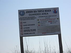 Jensen Sea Turtle Beach 012