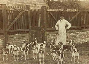 Caynsham-beagles