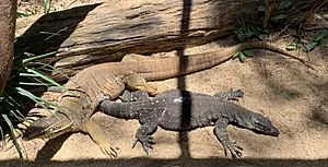Argus Monitor and Lace Monitor