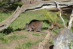 Wallaby at Happy Hollow Park & Zoo