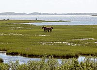Assateague fg02