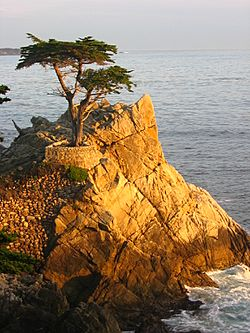 Lone Cypress Sunset