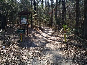 Bald Eagle Nest Trail at South Toledo Bend State Park