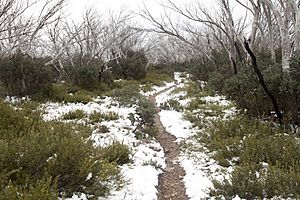 Snow on the Bungalow Spur track - Mount Feathertop