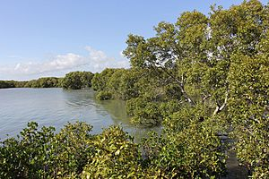 Mangroves Immediately South of Toondah Harbour, Cleveland, Queensland, 2014