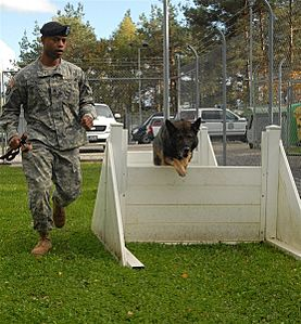 Working Dogs, Handlers Share Special Bond DVIDS124942