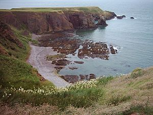 Bowdun Head and Castle Haven, near Stonehaven - geograph.org.uk - 31869