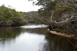 Donnelly River 2