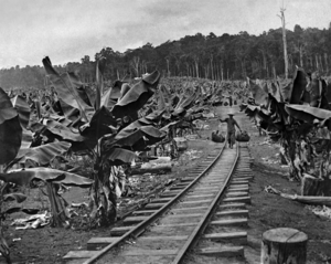 Queensland State Archives 1888 Chinese banana plantation Geraldton 1902