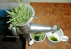 WheatGrassJuicing