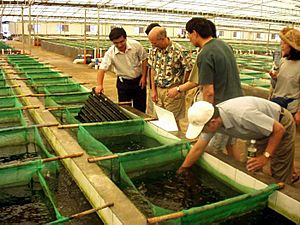 Abalone-farm1web