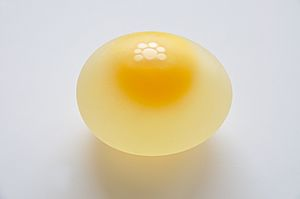 Chicken Egg without Eggshell 5859
