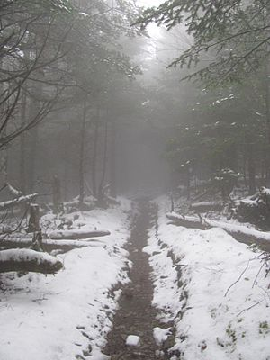 Mount Guyot; Foggy and Lonely Appalachian Trail