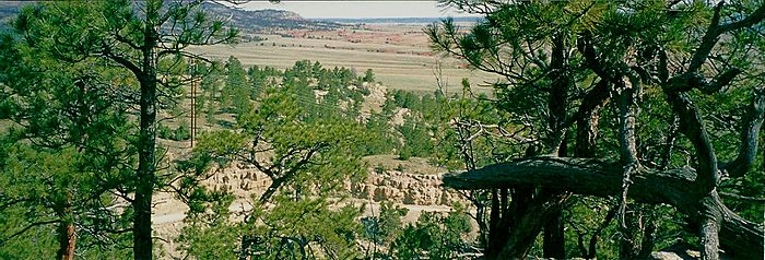 Black Hills Panorama with Trees