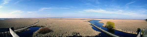 Pt Pelee Marsh Boardwalk