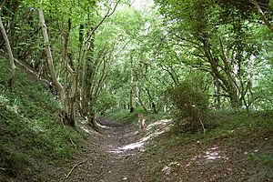 Bridleway going NW from the Dorsetshire Gap - geograph.org.uk - 1460038
