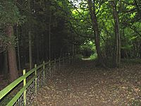 Cotswold Way, Dowdeswell Woods - geograph.org.uk - 43886