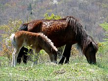 Grayson Highlands Ponies-27527-1