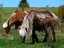 Grayson Highlands Ponies-27527-3